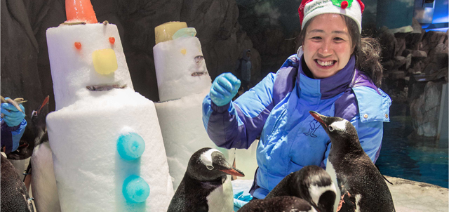 Caption: The happy-feet of penguins at the South Pole Spectacular are waddling together to spend a frosty Christmas with the snowman and our Santa-dressed animal trainer.