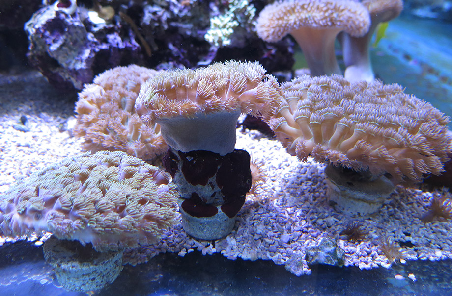 Growing coral