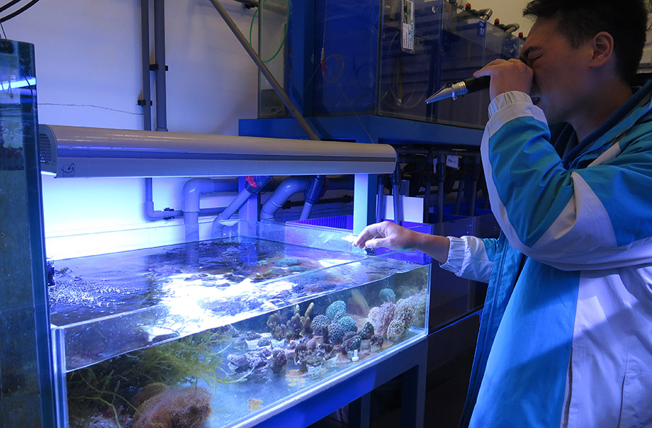 Collaborative Conservation Breeding of Hard Corals