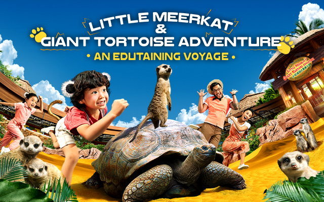 Little Meerkat and Giant Tortoise Adventure